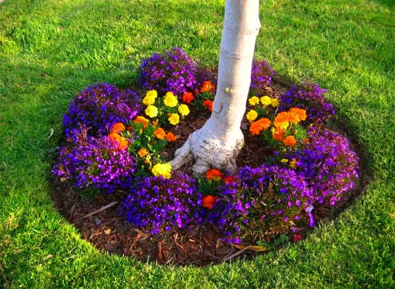 Если вы всё-таки настаиваете на цветах под деревом – можно высаживать их из горшков, дождавшись на солнце начала цветения