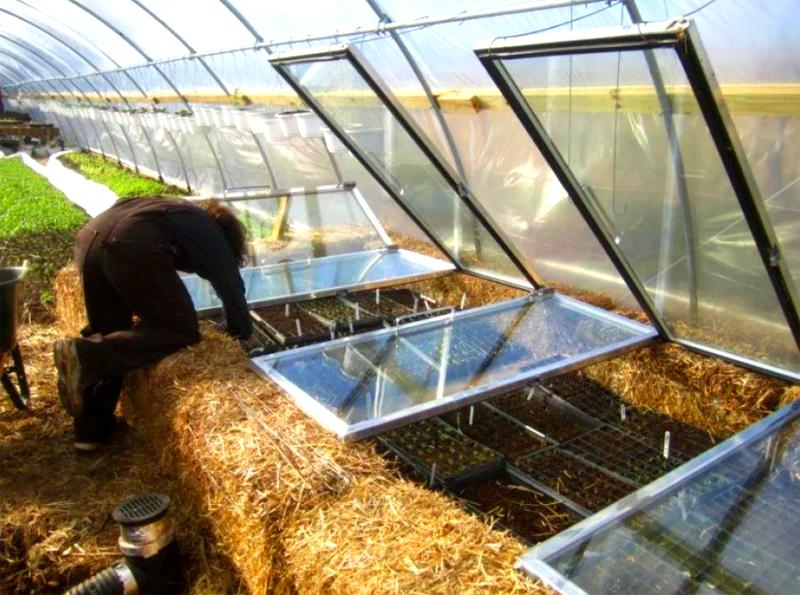 Когда поверхность соломенного слоя станет ощутимо тёплой, сверху насыпают грунт и высаживают растения