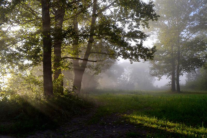 Рано утром посмотрите, где на участке ложится туман. Где он гуще – там может быть вода. Кроме того, в этом месте больше всего росы