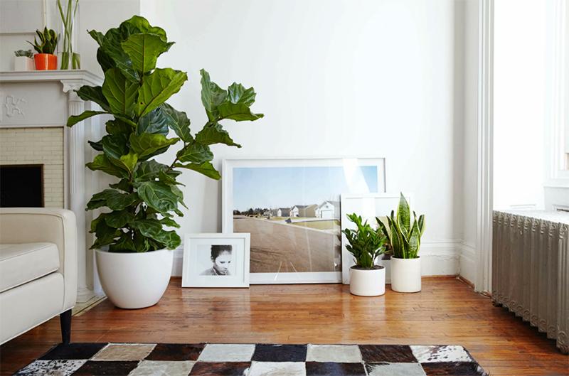 Пара растений в горшках полностью преобразит комнату и подарит ей ощущение домашнего уюта