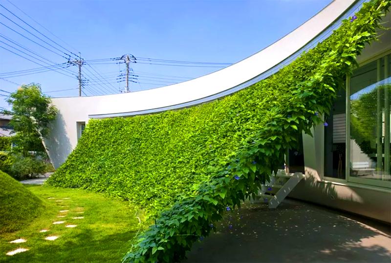 Сооружение такой конструкции и её озеленение требует времени и терпения, зато ничего привлекательнее для дачи быть не может