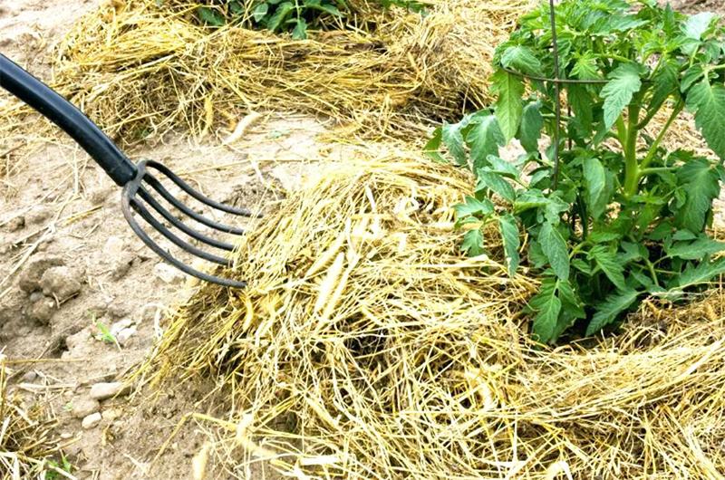 Мульчирование почвы: нужная вещь или потеря времени