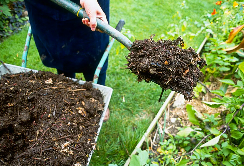 Тёмный материал притягивает солнечное тепло, плотный слой удерживает воду, а питательные вещества, содержащиеся в такой мульче, обогащают почву