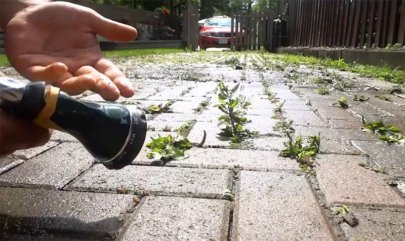 После обработки не пройдёт и недели, как все сорняки увянут и высохнут