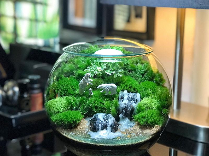 Очень шикарно смотрятся инсталляции в аквариумах, где мох имитирует деревья