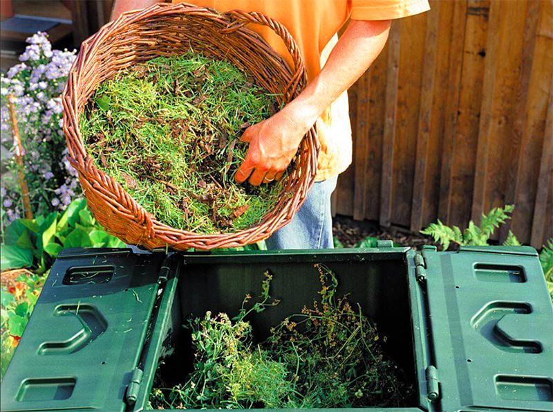 Туда же, в компост, можно отправить и сорняки, только без корней и семян. Дикие растения настолько живучи, что способны сохранять всхожесть и в перегнивающем компосте