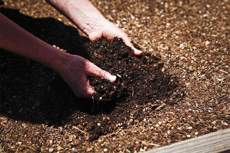 Если у вас созрел компост – нужно выложить его на почву и перекопать