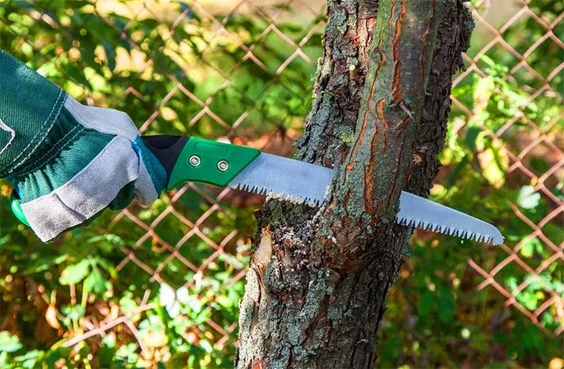 Кстати, самому лучше не пилить – дерево может погибнуть, и вы будете возмещать ущерб