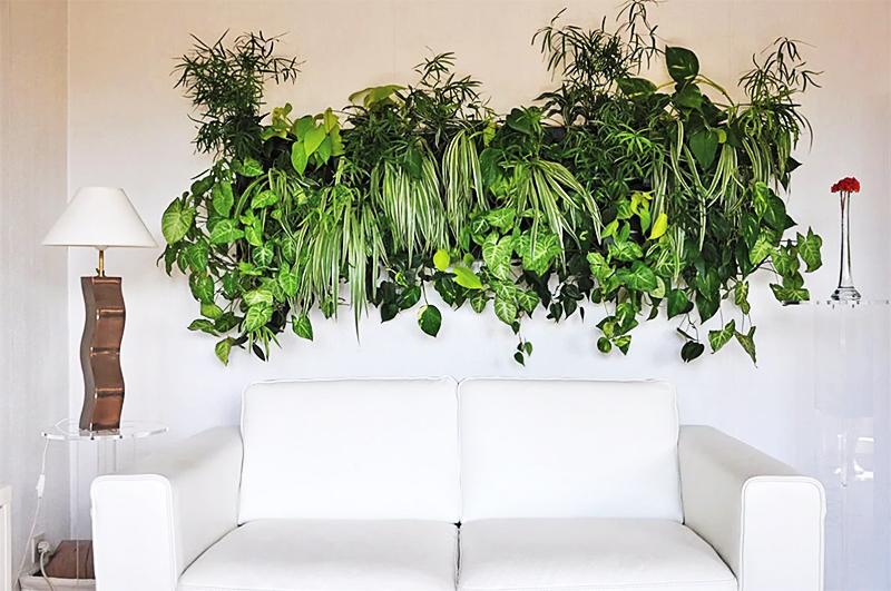 Панно из разнообразной зелени крепится на стену и питается благодаря системе полива